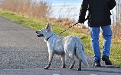 Information : Chiens tenus en laisse – divagation – chiens catégorisés